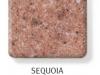 sequoia-247x300
